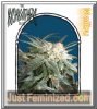 Kush Brothers Malibu Female 5 Marijuana Seeds
